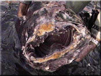 The Mouth of the Coelacanth