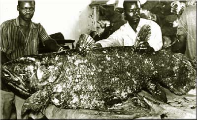 Mozambique Female Coelacanth